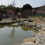 伊豆アニマルキングダムのカピバラたちの自由気ままな暮らしを見てみよう! 春の伊豆旅行2014 その5