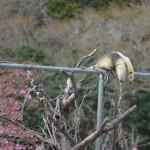 伊豆アニマルキングダムでたっぷりと動物を見た後に海沿いにある北川温泉へと移動する 春の伊豆旅行2014 その9