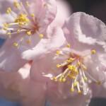 【東京路地裏散歩】台東区谷中にある全生庵の梅