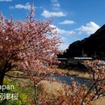 PENTAX K-3で日本の春、河津桜咲く伊豆の風景を動画撮影してみた!