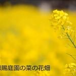 【東京春景色】浜離宮恩賜庭園の菜の花畑をNikon D7000で動画撮影をしてみた!