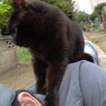 東京路地裏散歩の途中でネコと僕とのツーショット写真を撮影してみる