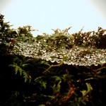 トイデジカメのVQ1015ENTRYで撮影した水と田んぼとつけめんと