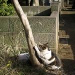 今週の365 DAYS OF TOKYO(11月4日~11月10日) ~ 谷中のネコ特集