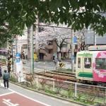 【Tokyo Train Story】桜の前を桜の都電が走り抜ける