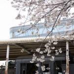 【Tokyo Train Story】大塚台公園のC58407