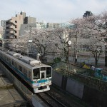 【Tokyo Train Story】代々木八幡駅近くの線路際の桜(小田急小田原線)