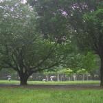 今週の365 DAYS OF TOKYO(7月15日~7月21日) ~ 梅雨時の水と晴れの日の水