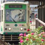 【Tokyo Train Story】初夏のバラ(都電荒川線)