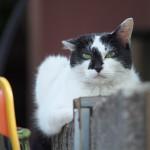 今週の365 DAYS OF TOKYO(8月12日~8月18日) ~ 谷中で会ったネコ