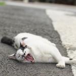 今週の365 DAYS OF TOKYO(8月19日~8月25日) ~ 谷中の夏のネコたち