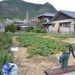 小豆島の土庄路地裏散歩で見つけた井戸ポンプとネコたち 岡山たびきっぷで行く瀬戸内の旅 その20