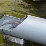 流しカワウソ装置を逆走する市川市動植物園のコツメカワウソ 夏の青春18きっぷの旅 たっぷり千葉県編 その5