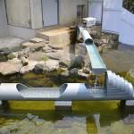 市川市動植物園のコツメカワウソが水の中で遊びはじめたものの流しカワウソへの道はかなり険しい! 夏の青春18きっぷの旅 たっぷり千葉県編 その4