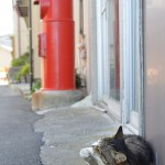 太海の町のハイレベルなモデルのようなネコ 夏の青春18きっぷの旅 たっぷり千葉県編 その14