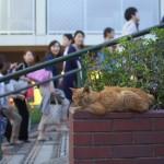 今週の365 DAYS OF TOKYO(10月21日~10月27日) ~ 夕やけだんだんのネコたち