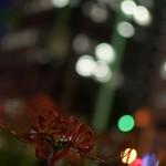 今週の365 DAYS OF TOKYO(10月7日~10月13日) ~ 浜松町にある世界貿易センタービルからの眺め特集