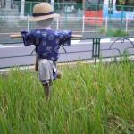 【Tokyo Train Story】実りの季節(都電荒川線)