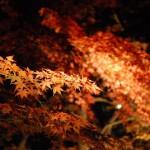 ライトアップされた六義園の紅葉を撮影 六義園紅葉散策 その4
