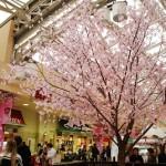 上野駅中央改札口のサクラは満開です