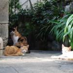 西新宿4丁目の路地裏は猫の楽園だった! 西新宿4丁目路地裏散策 その2