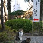 亀戸天神の猫たち 亀戸散策 その2