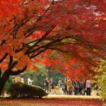 紅、黄、緑の色の洪水 六義園紅葉散策 その2