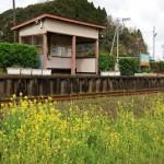 いすみ鉄道新田野駅周辺で菜の花と列車を撮影する 春の青春18きっぷの旅 いすみ鉄道530編 その2