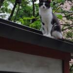 秋葉原の柳森神社にいた猫2匹 秋葉原ー新宿散歩 その3