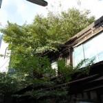 植物に飲み込まれつつある根津にある木造家屋の廃墟