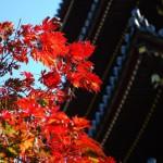 上野動物園のカピバラさんとプレーリードック 秋の東京散歩 その1