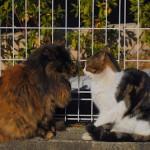 谷中、夕焼けだんだんのラブラブな猫たち