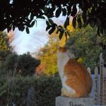 谷中の墓地で出会った凛々しい猫