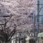 【Tokyo Train Story】桜景色のレトロ風都電車両