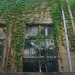緑に侵食されていく美しい校舎 旧下谷小学校 その2