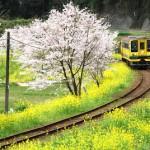 いすみ鉄道東総元駅周辺で春の景色を撮影する 春の青春18きっぷの旅 いすみ鉄道530編 その4