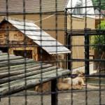 井の頭自然文化園のカピバラ、ファーとヒナタの観察日記
