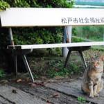 矢切の猫たち 柴又・矢切散策 その5