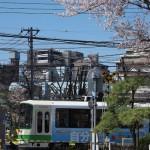 【Tokyo Train Story】青空と桜と都電荒川線