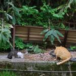 湯檜曽の町に住む猫たち 群馬新潟長野旅行 その5