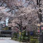 【Tokyo Train Story】桜トンネル(都電荒川線)