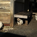 小湊鐵道高滝駅で暮らす3匹の猫たち 冬の青春18きっぷの旅ー小湊鐵道とカピバラ編 その6