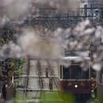 【Tokyo Train Story】飛鳥山公園から都電荒川線を見下ろす