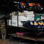 赤羽で見つけた井戸ポンプとトマソンと猫