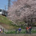 【Tokyo Train Story】大きな桜の向こうから(西武多摩川線)