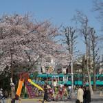 【Tokyo Train Story】春の公園からの眺め(東急世田谷線)