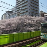 【Tokyo Train Story】神田川沿いの桜(都電荒川線)