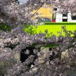 【Tokyo Train Story】桜トンネルの隙間から(都電荒川線)