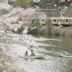 【Tokyo Train Story】桜咲く外濠の脇を総武線が駆け抜ける