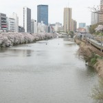 【Tokyo Train Story】東京のど真ん中で電車を横目にお花見をする(総武線)